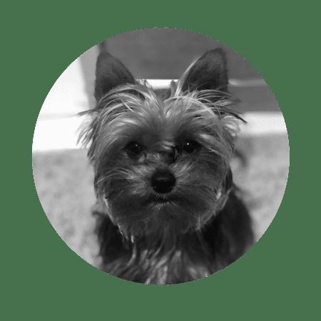 ted-the-dog-magic-mondays-team-b&w